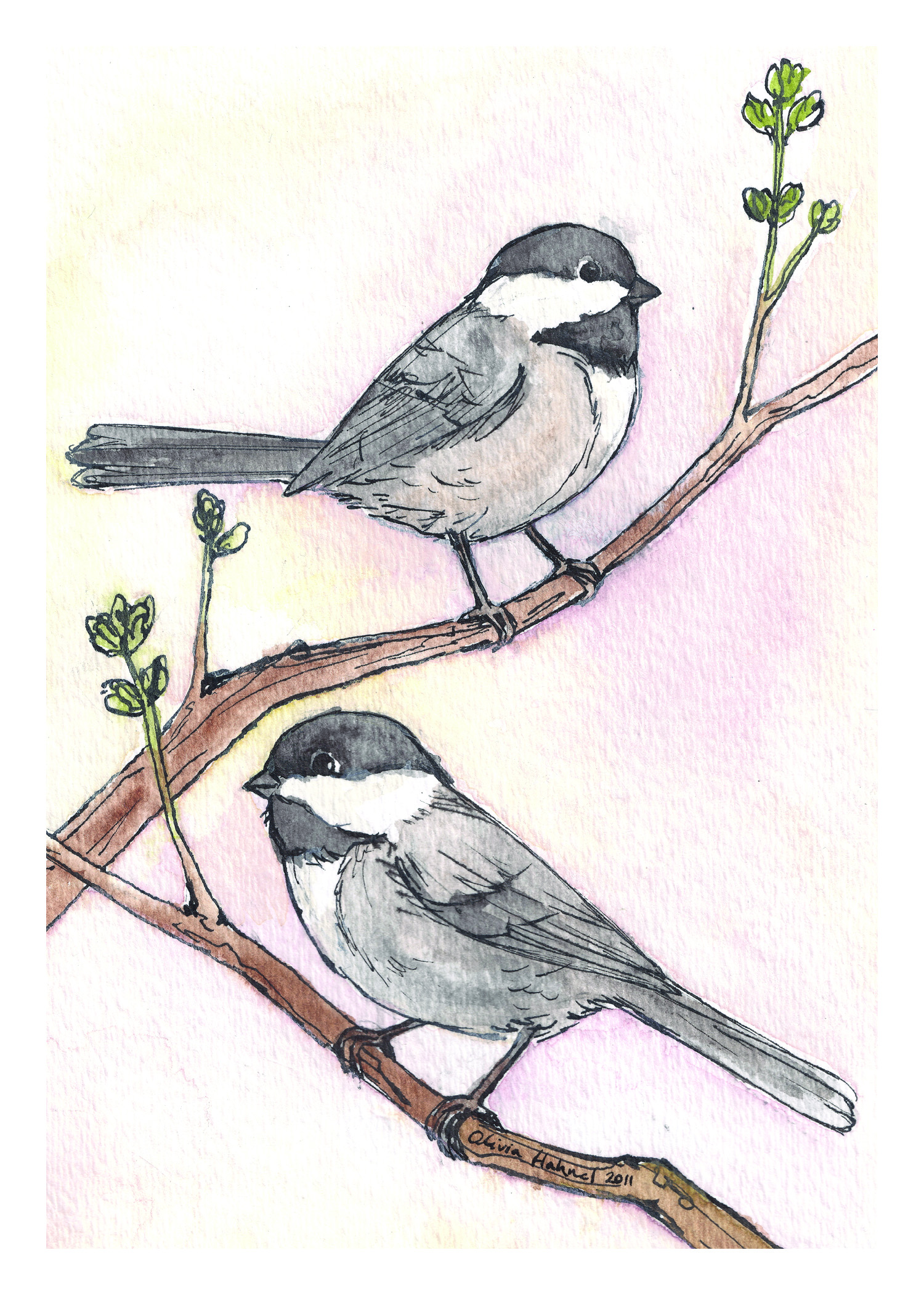 Chickadees 2011 Watercolor and India ink