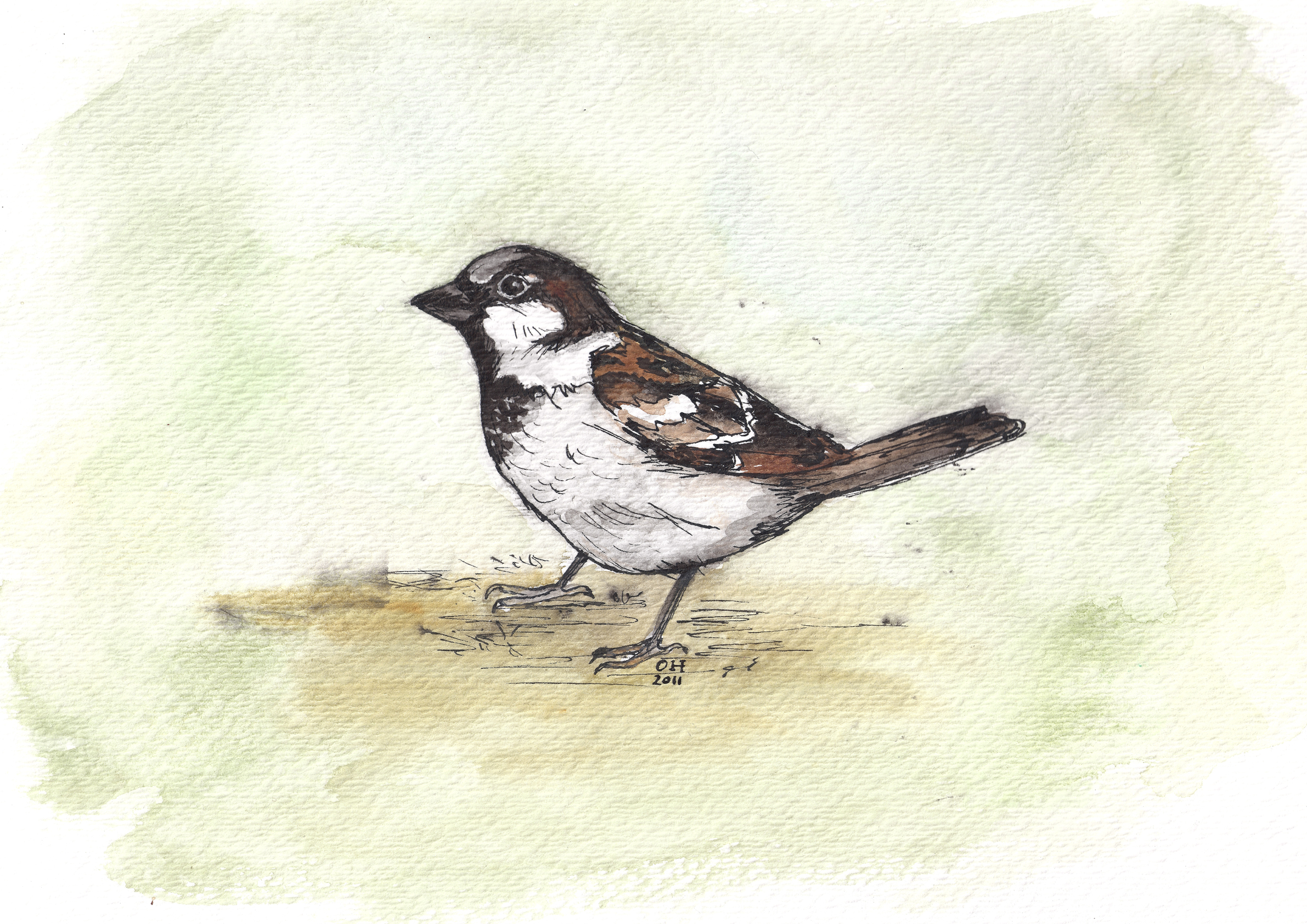 Sparrow 2011 Watercolor and India ink