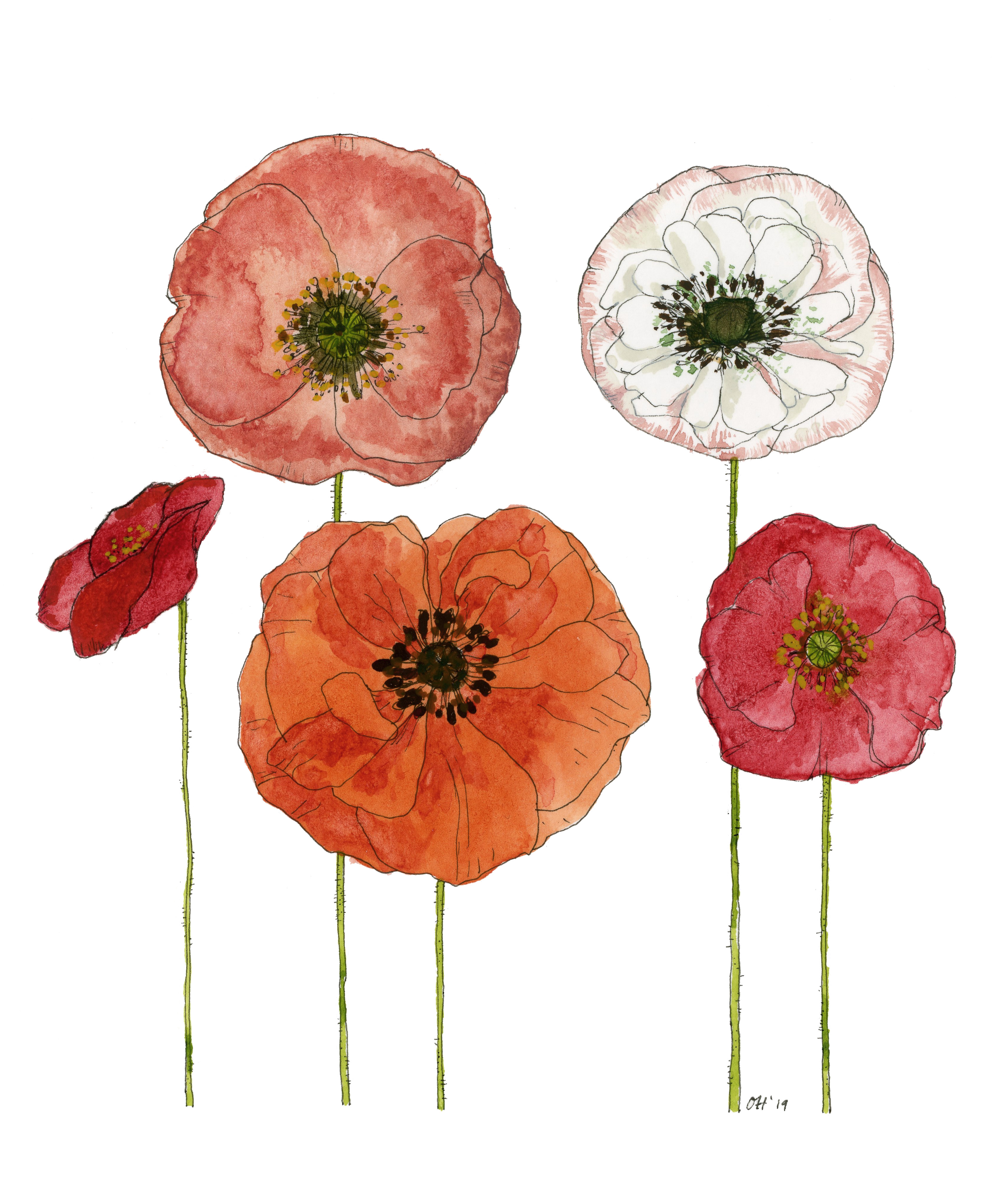 Poppies 2019 Watercolor and Micron pen