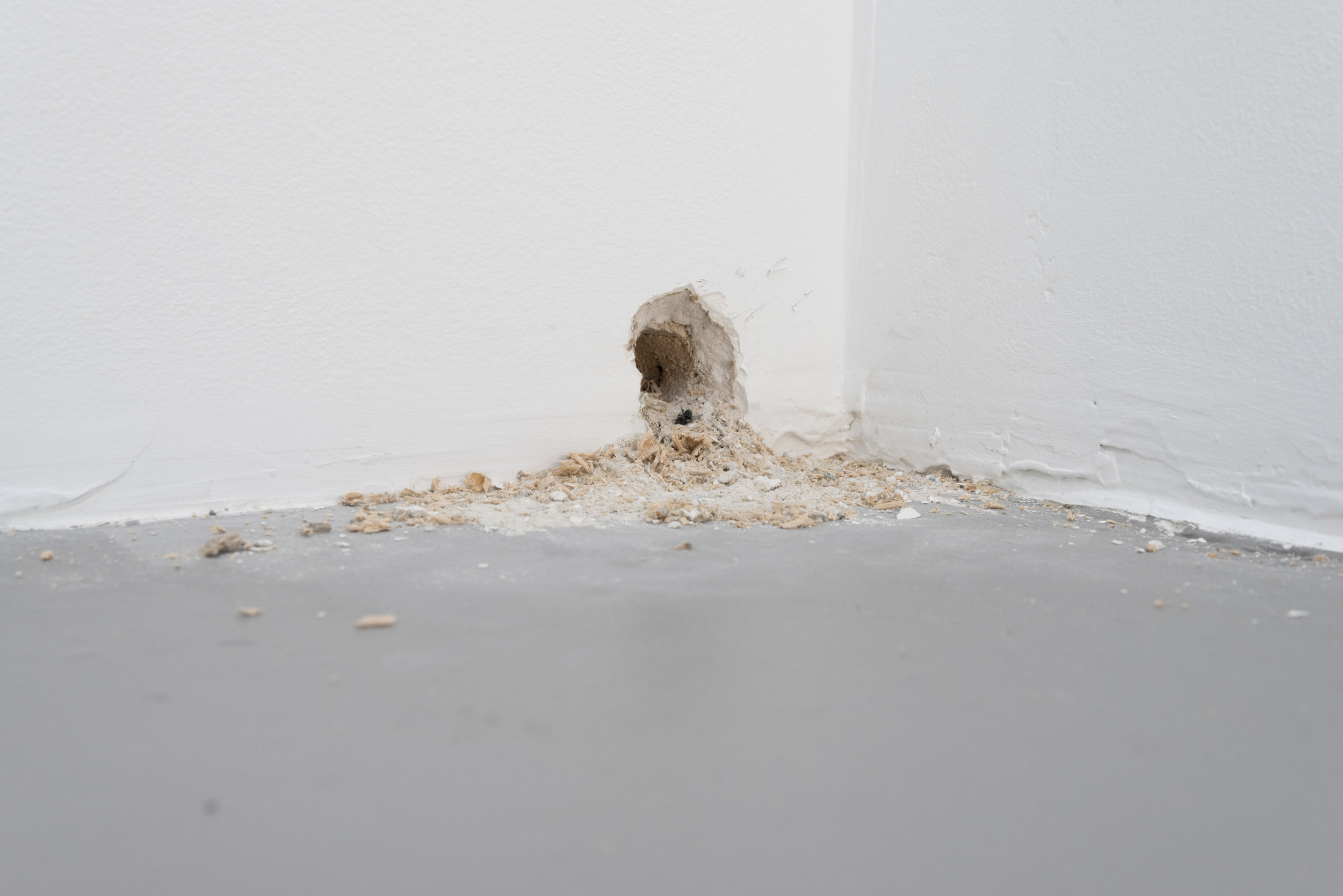 Exit (Mouse Hole),  2018 installation dimensions variable