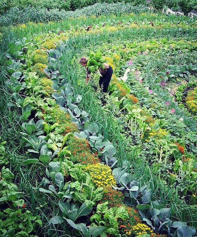 Isn't this magnificent? 🍃🌾🍁☘️💐🌼🌻🌸🌺 A holistic permaculture multi-species vegetable garden that mimics nature in ecosystem diversity and supports itself to grow and regenerate over time #permaculture #holism #ecosystem #nature #incredible #amazing
