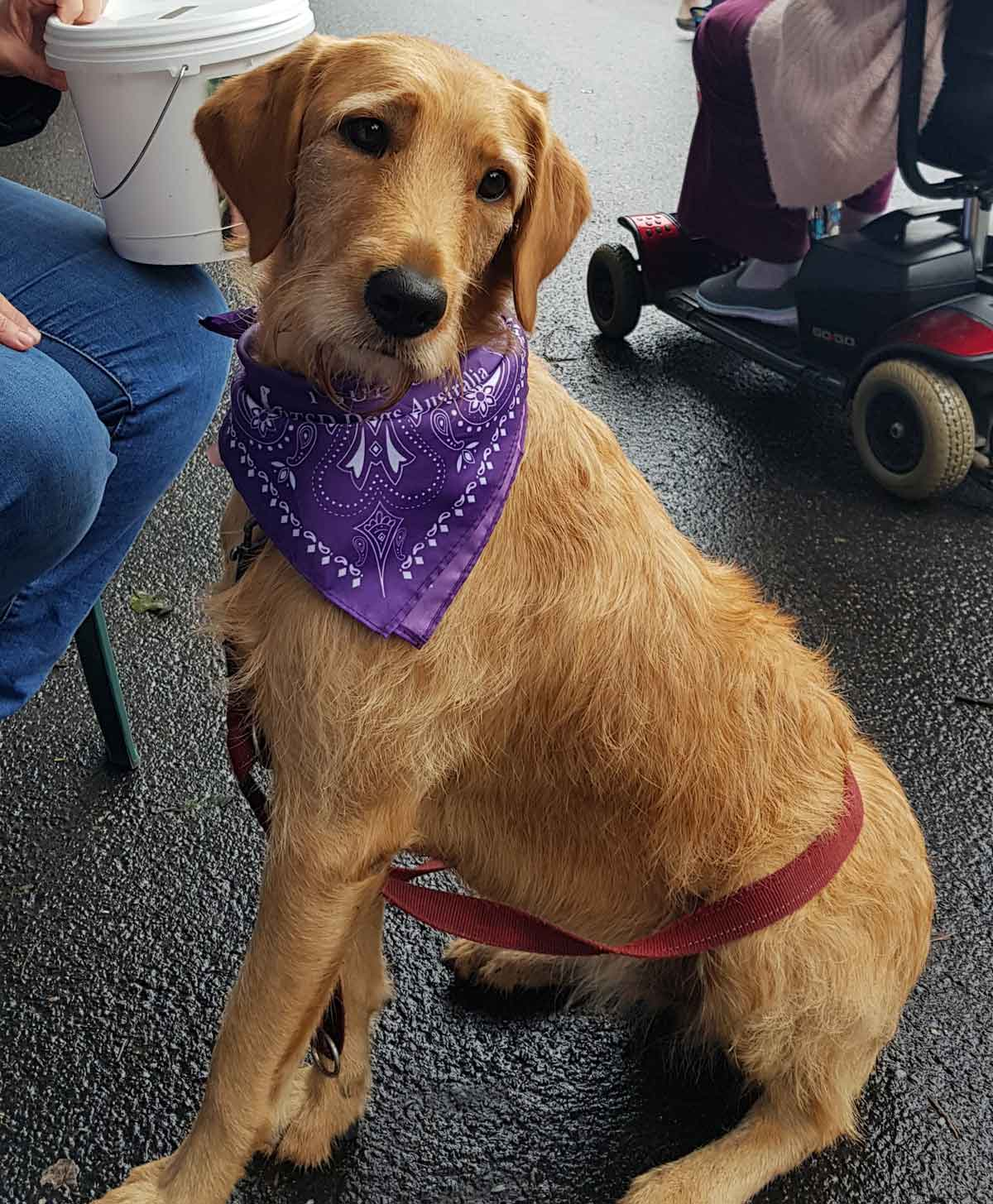Our Mission - At PTSD Dogs we believe you never walk alone when you have a trained PTSD Assistance Dog by your side. Gentle, intuitive, intelligent and full of unconditional love. They can provide a sense of calm amidst turmoil, safety amid confusion and comfort in sadness.Learn More