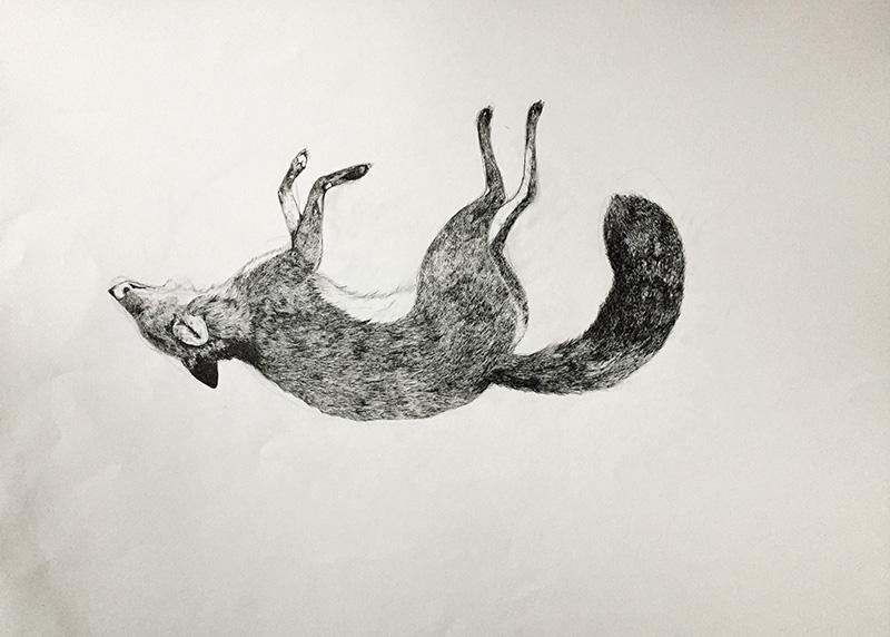 Les dessins de Claire Larras (aka polkapolka), sur la faune des bords de route.