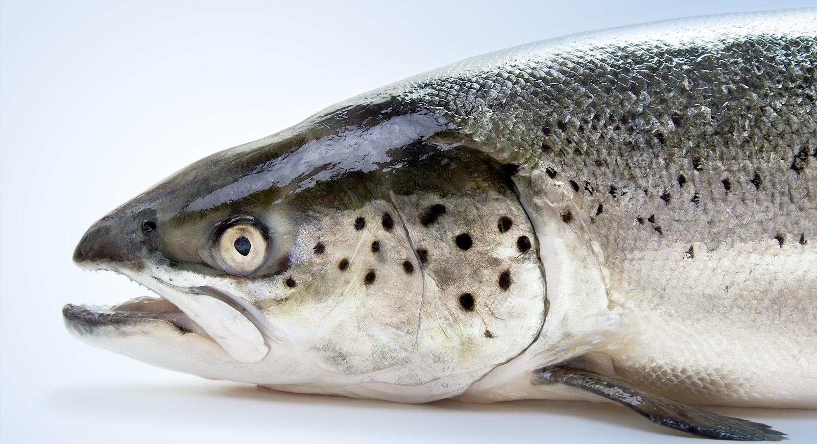 Fish Health.jpg