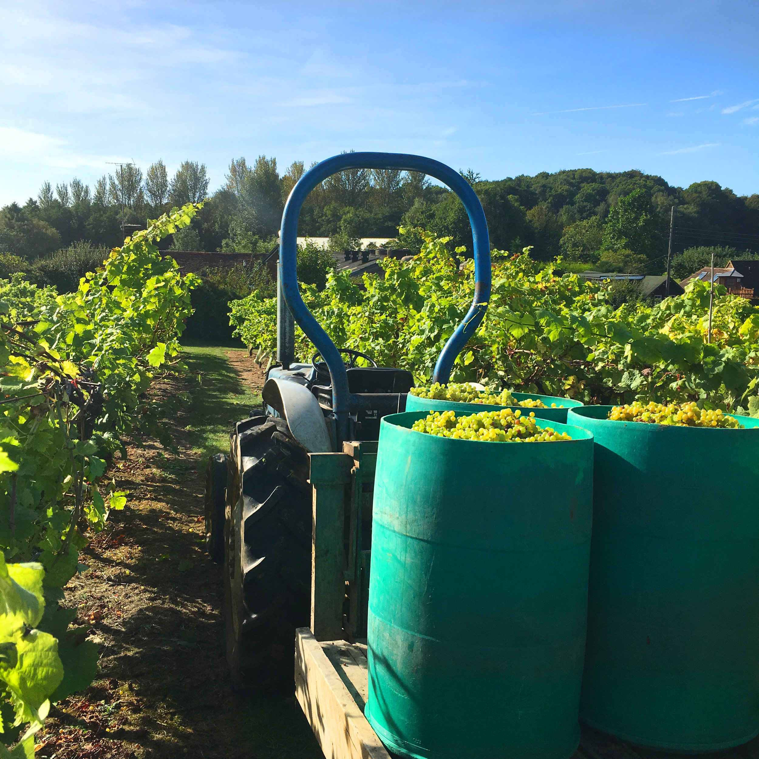 Biddenden Harvest 2016.jpg