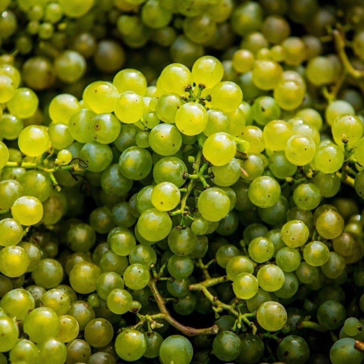 Simpsons+Wine+Estate+-+Chardonnay.jpg