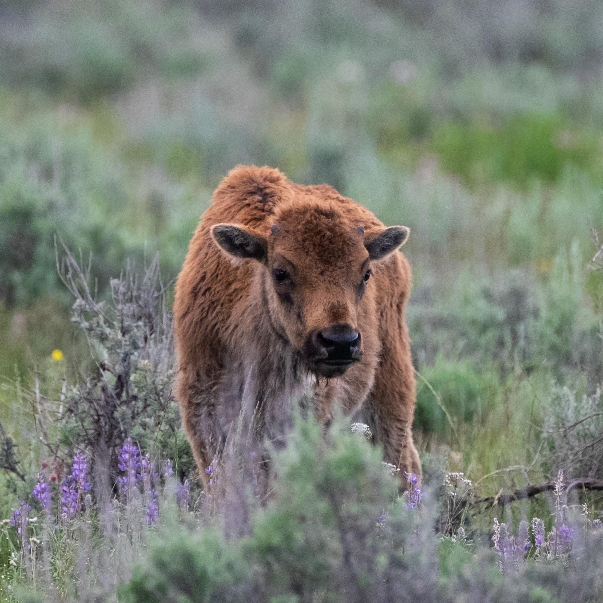 Iconic Yellowstone-8.jpg