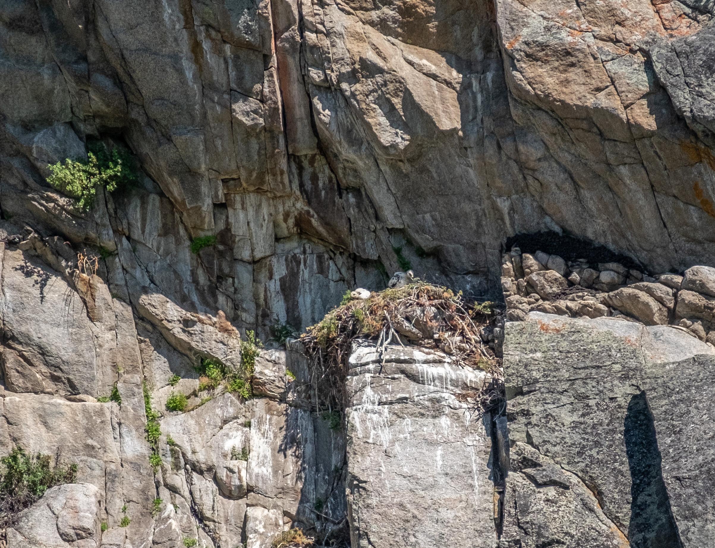 GoldenEagleSurprise-10.jpg