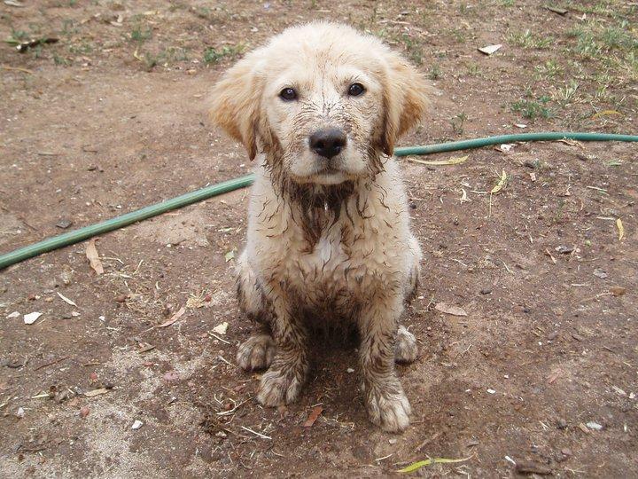 muddy lily pup.jpg