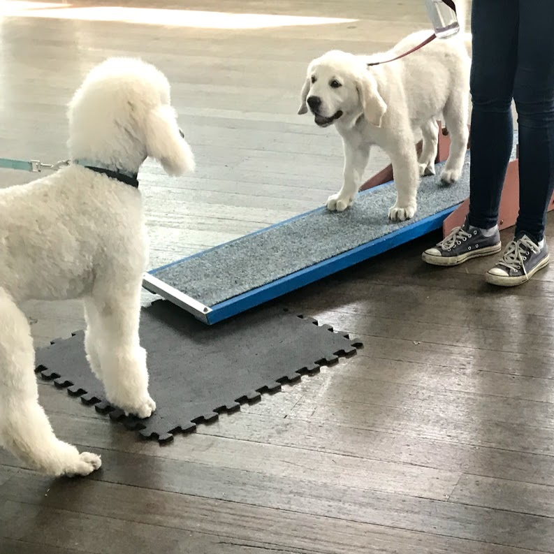 Group Classes - Puppy preschool, basic manners for older dogs, advanced graduate programs.