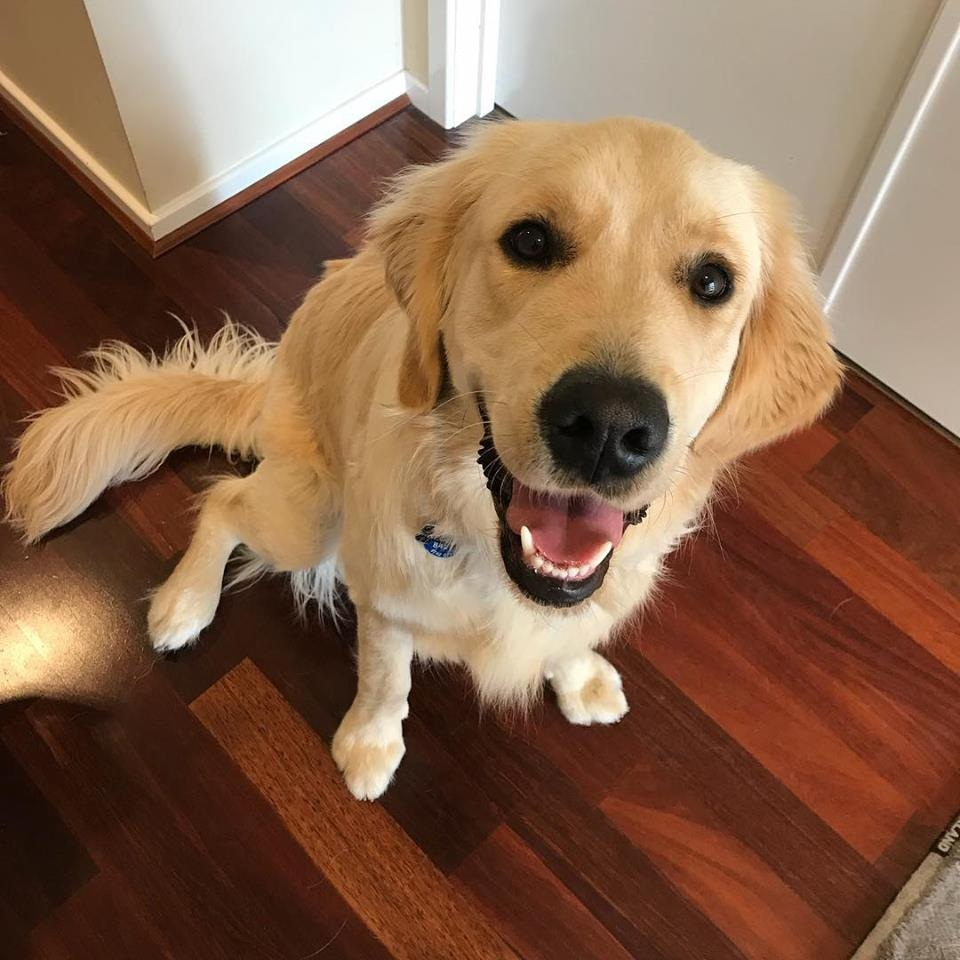 private training - Training and behaviour modification services for pet dogs and working dogs. From skills training, addressing manners issues in the home or behaviour modification for behaviour concerns including reactivity and anxiety.