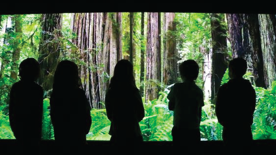 Image.ie:  'Eye-opening and empowering': this climate change experience at Powerscourt is a must