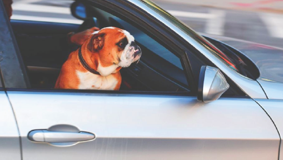 Image.ie  Life of a millennial: I'm learning to drive at 28 and have mixed feelings