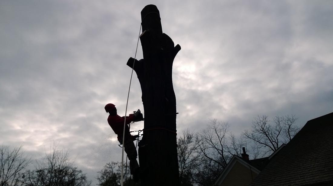 A Top 10 Service - State of the Art Equipment Reasonable Rates for Qualified Tree Care