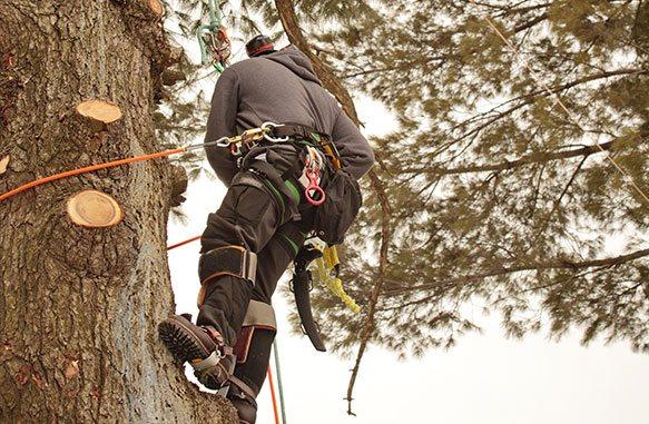 tree-cutting-image-1.jpg