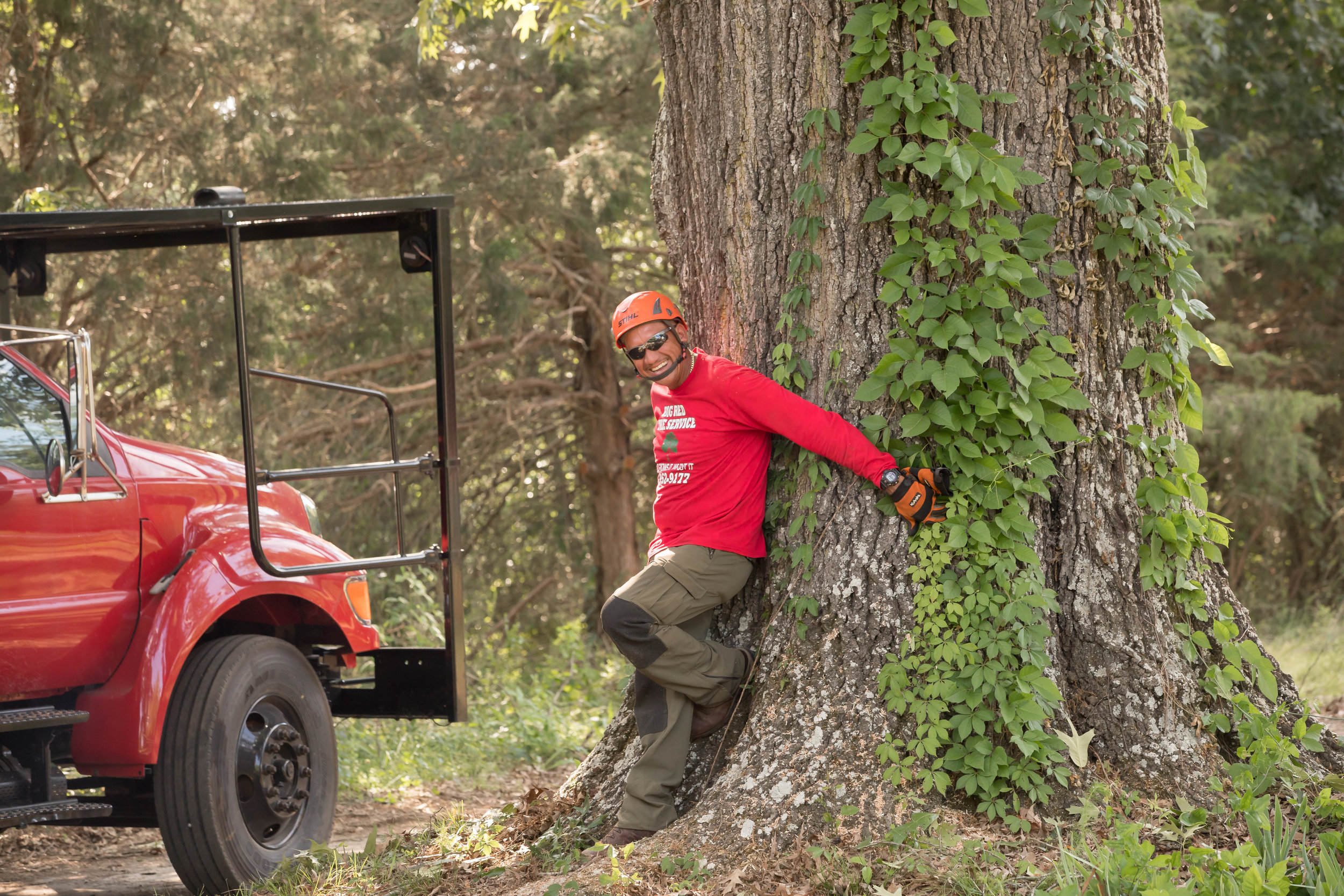 Tree Hugger - Everything You Need in a Tree Care Service Provider
