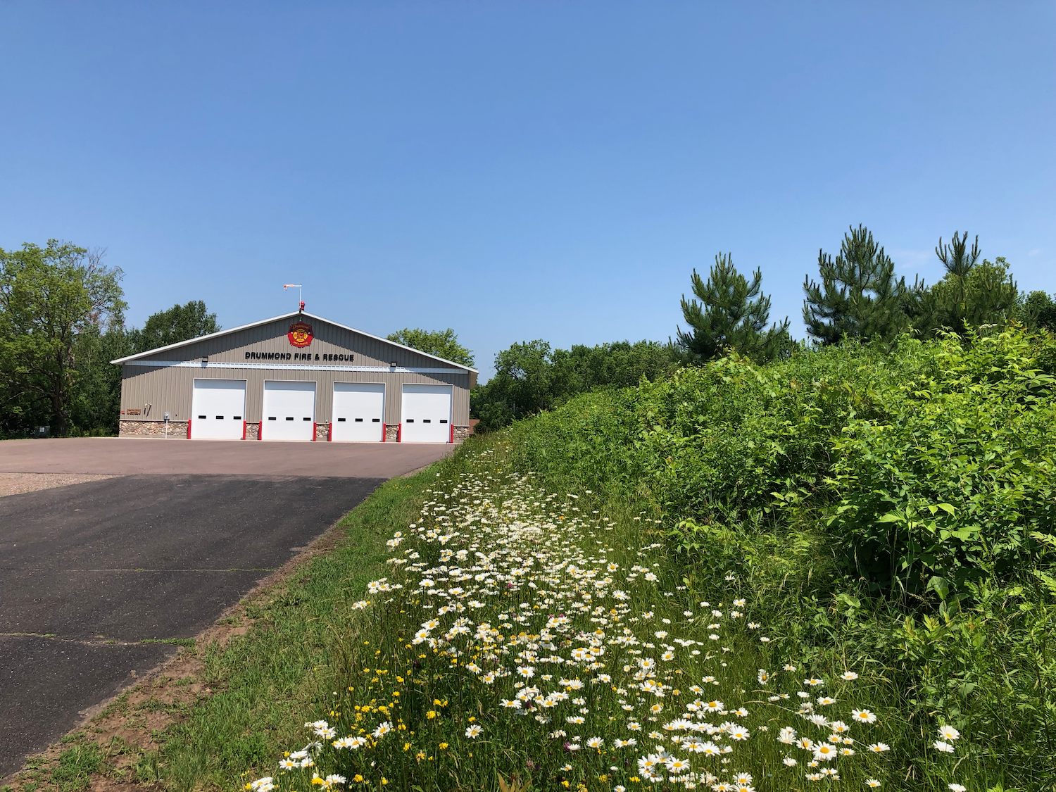 Fire Hall in Summer with Daisies.png