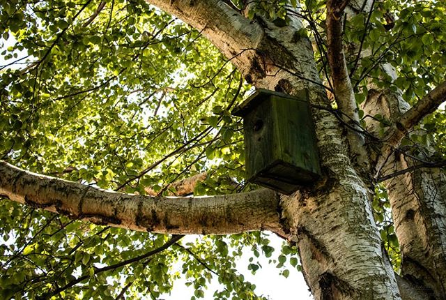 Shaded bird house, now home to bumble bees... Which are technically in the photo, you just can't see them...