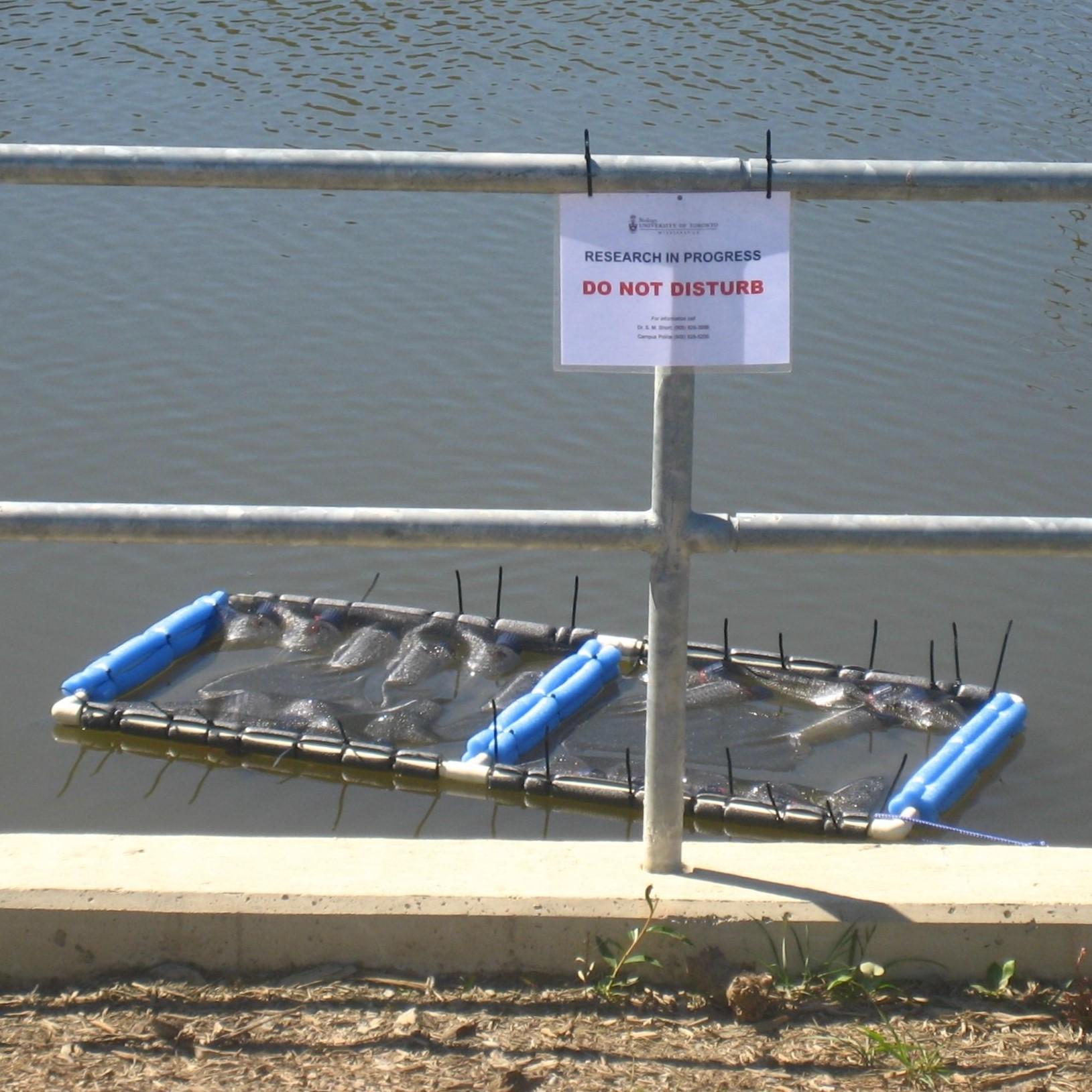 Pond Incubation square.jpg