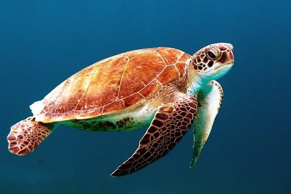 180402 Turtle Pixabay 600x400.jpg