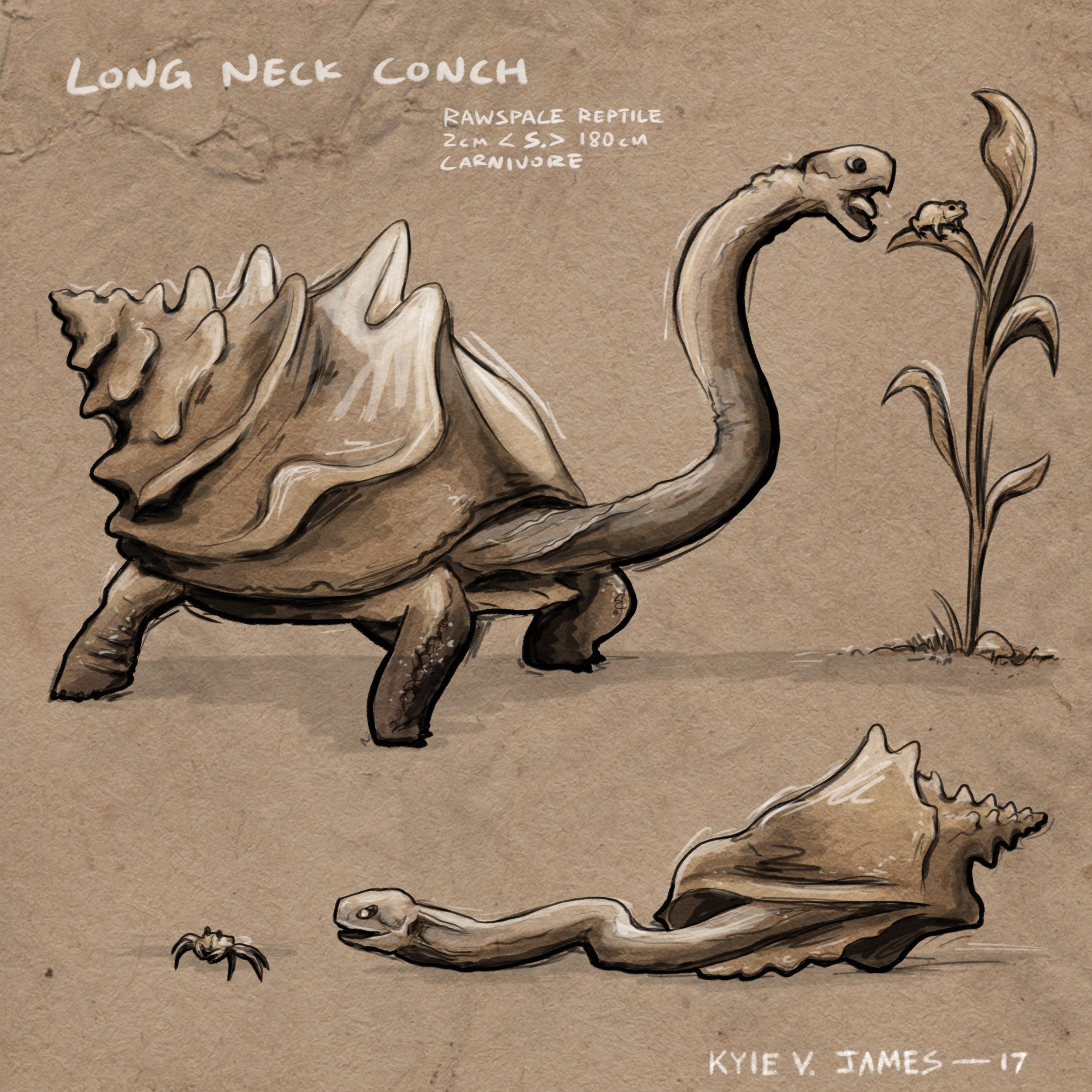 17-7-29 Turtle conch 1.jpg