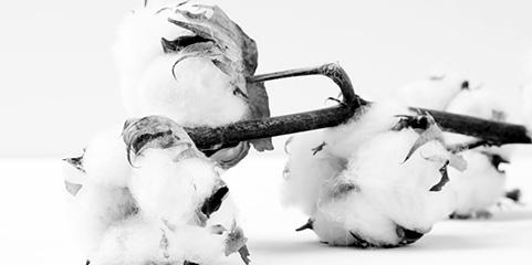 img-supply-cotton.jpg