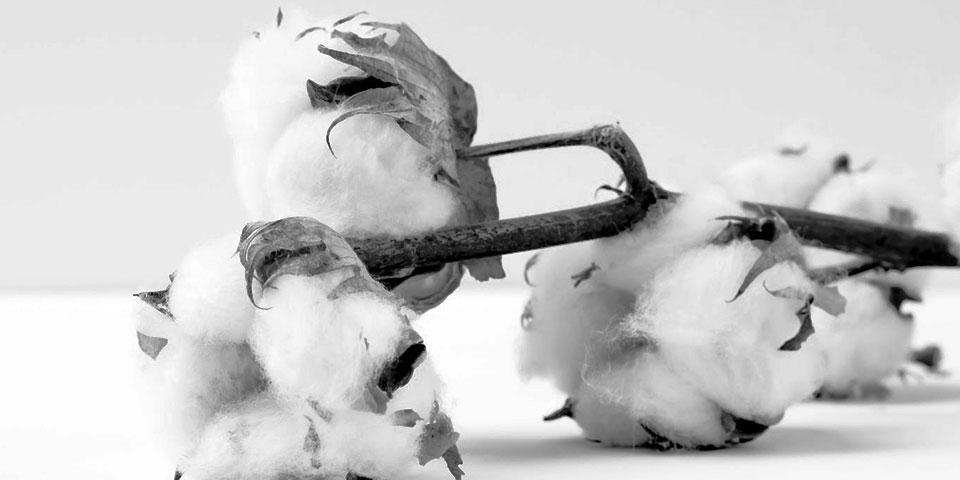 img-supply-cotton (1).jpg