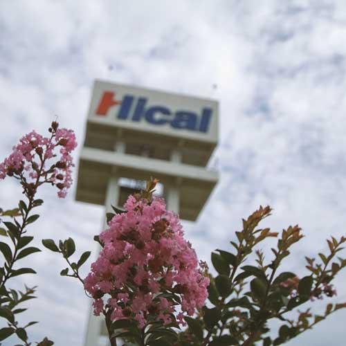 hical-flowers-FE250KD.jpg