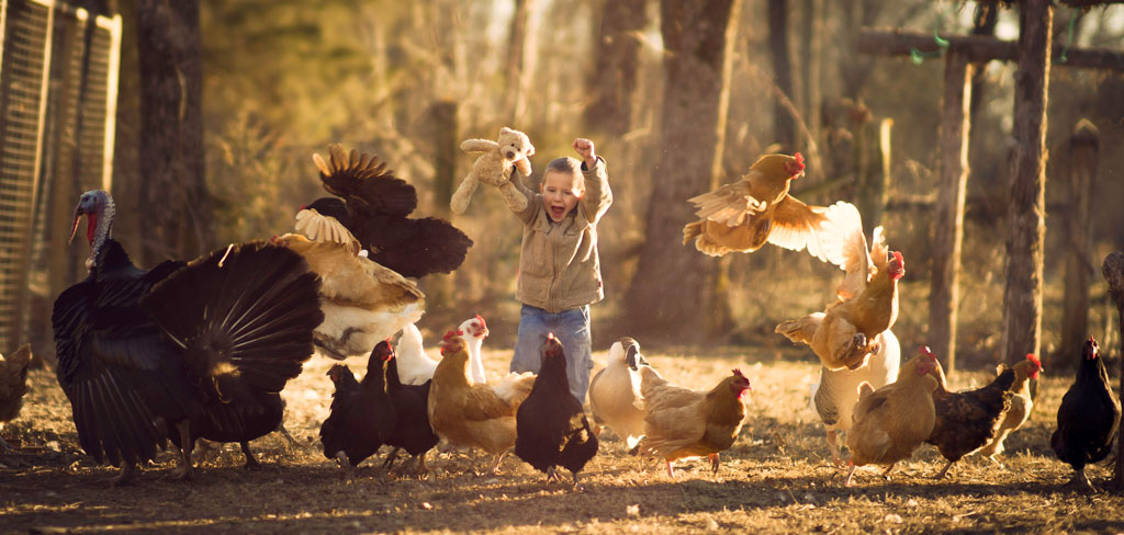 boy-running-through-chickens.jpg