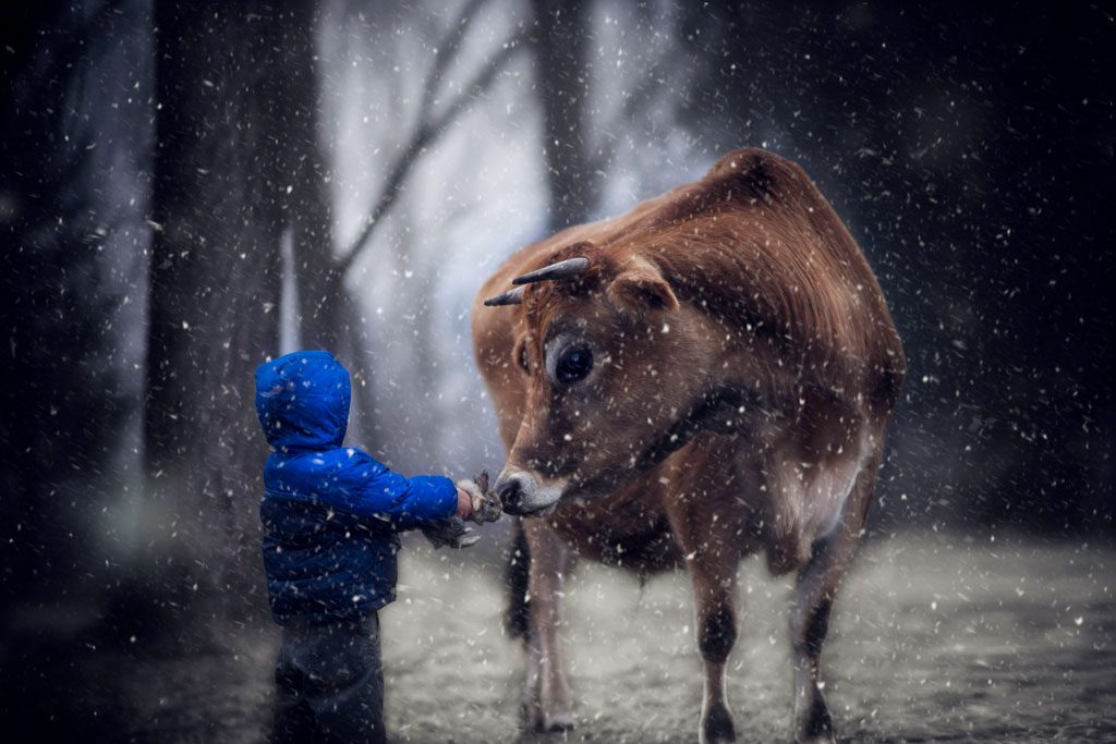 little-boy-holding-a-bunny-up-to-a-cow-1024x683.jpg