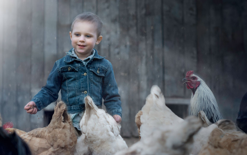 little-boy-with-chickens.jpg