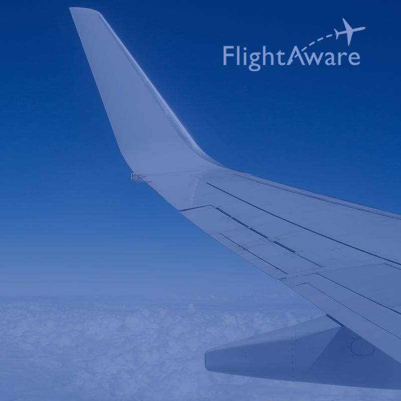 <p><strong>CHECK FLIGHT STATUS</strong></p>