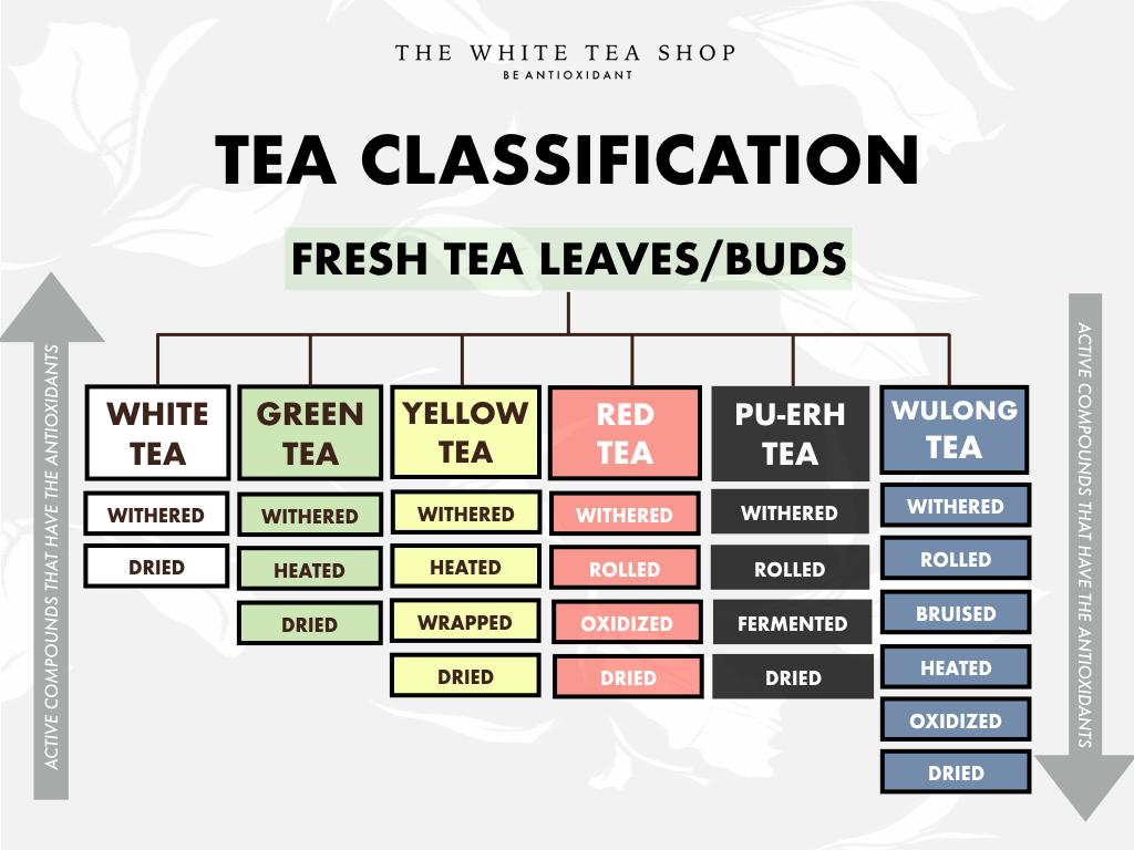 Processing Chart for Tea - The White Tea Shop.001.jpeg
