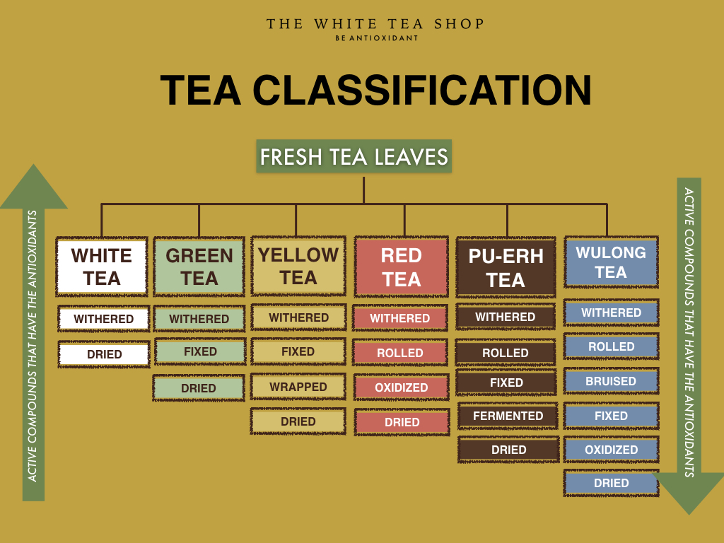 WHITE TEA is produced by just withering and drying the tea leaves. - Any part of the tea plant can be produced as white tea. There are only 4 main varieties of white tea defined by the part of the plants used:Silver Needles: Made from pure unopened buds. This is the most premium among white tea varieties due to the part of the plant used.Bai Mu Dan or White Peony: Made from buds and young leaflets that immediately found underneath the budsShou Mei: Made from broken, mature leaves and twigs. This is the most common variety of white tea in the market.Gong Mei: Made from older mature leaves, and small number of buds*** White tea can be produced from any variant of the tea plant. It can also be produced from any region or country that grows tea. But in choosing good quality white tea and because it is one of the most fragile tea type, you should connect with reputable sources such as The White Tea Shop. Our choices are based on science, not myth, We sourced them out for ourselves first and we share them with you!