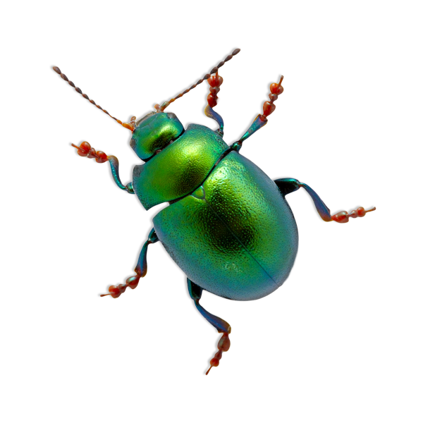 BeetleGreen-Creative-Design.png