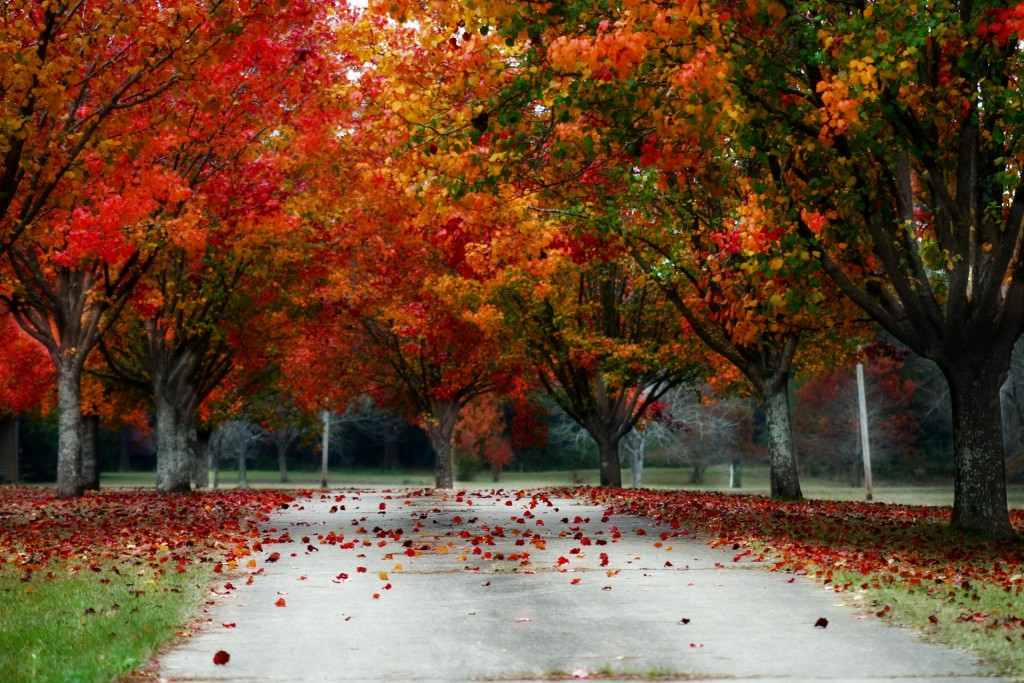 fall-1385353014IIB
