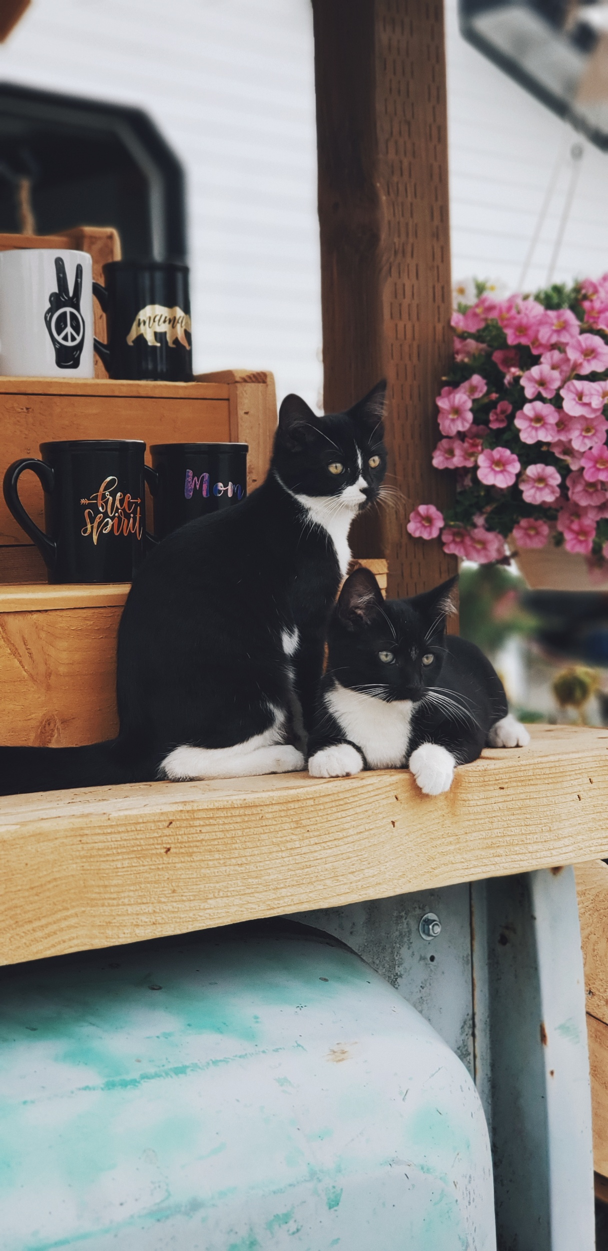 Barn kitties