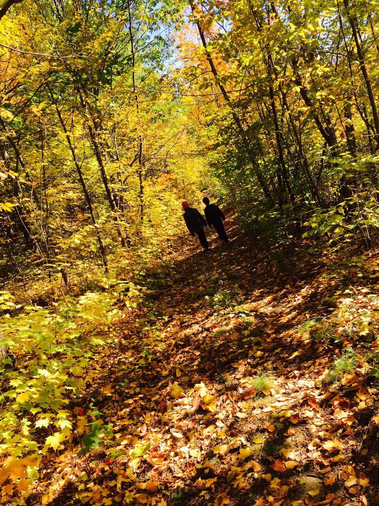 Les couleurs de l'automne dans le Parc