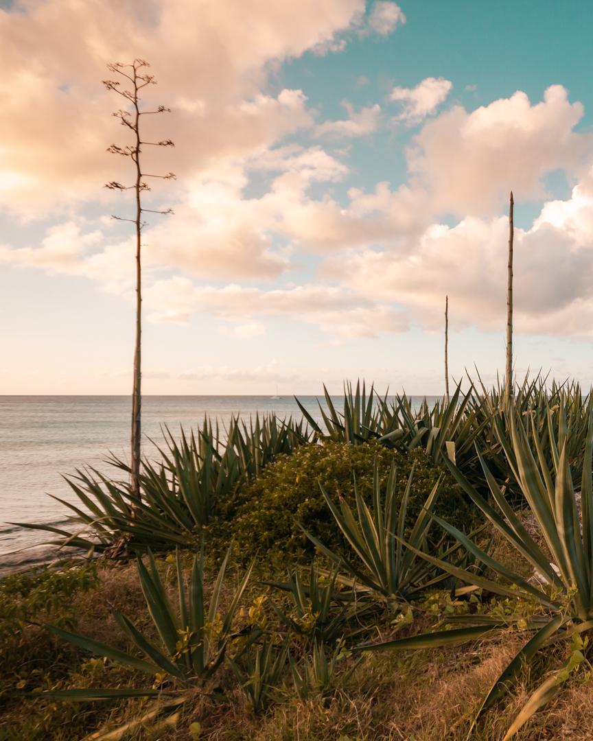 Malcolm Beach-2.jpg