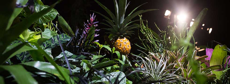 Preview Events - The Lowline Lab - garden - pineapple.jpg