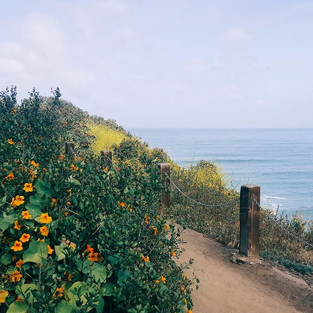 Sunday's view 🌸. . . . . . . . #sundayfunday #coffeewalk #lajolla #lajollacove #weekendvibes #wellness #feelgoodlife #optoutside #healthyliving #womenshealth #coastalliving #wellbeing #plantlady #feelgoodlifestyle