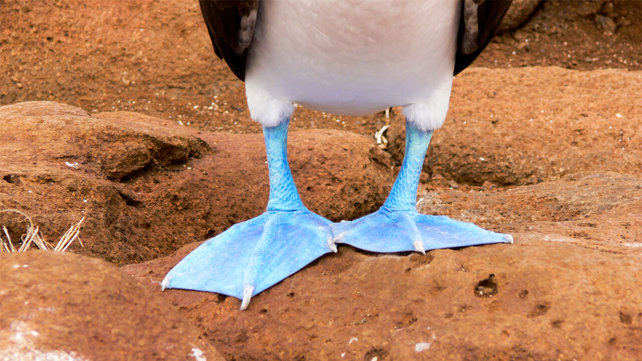 Galapagos Luxury Cruise Tour.jpeg