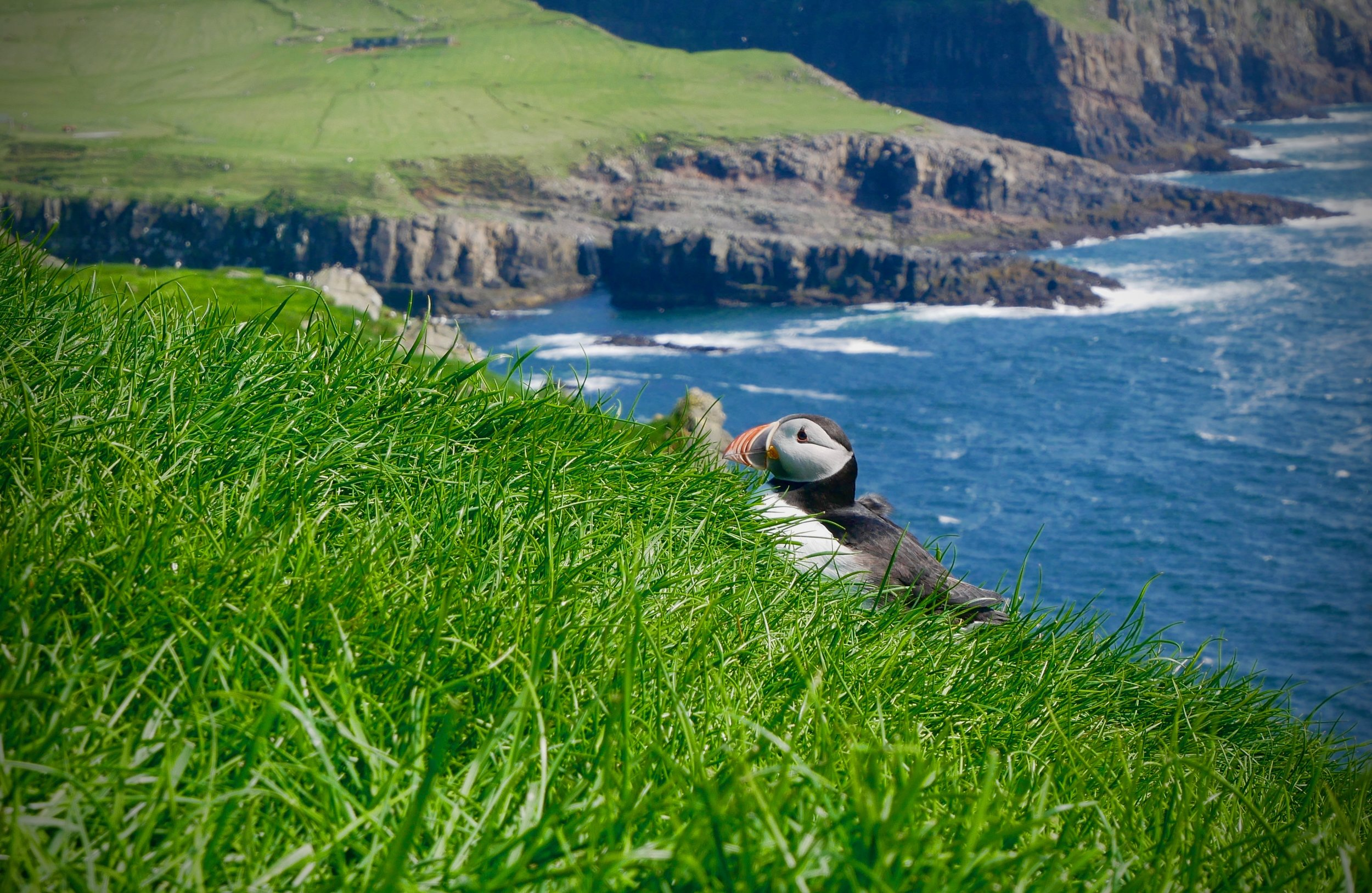 *Hiking with puffins, winding roads, and stunning scenery. -