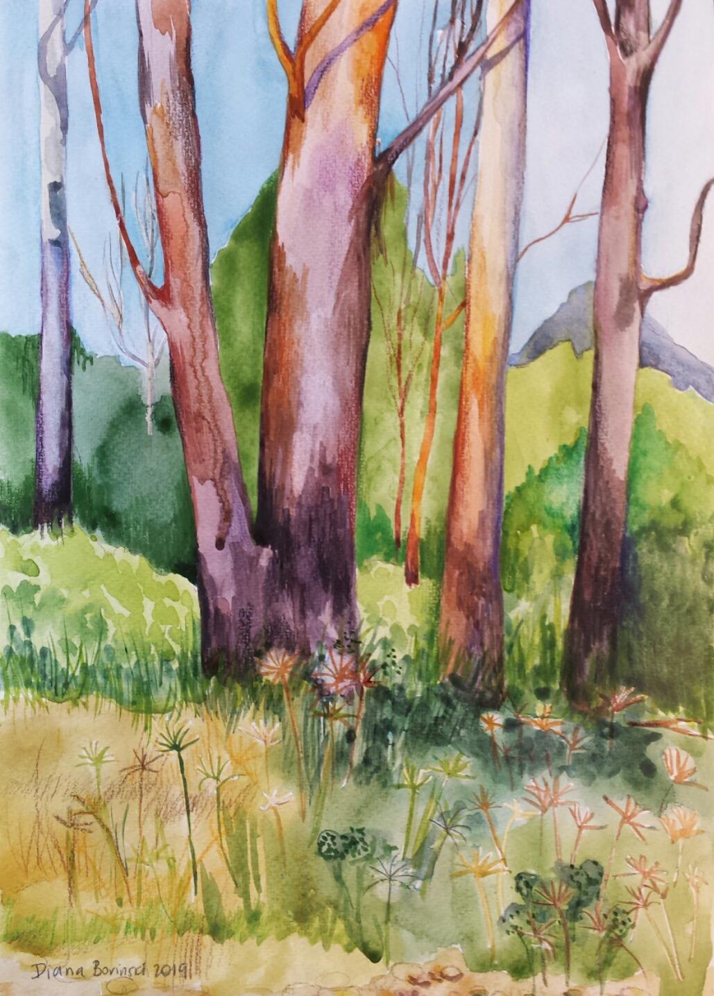 Lansdowne Forest.