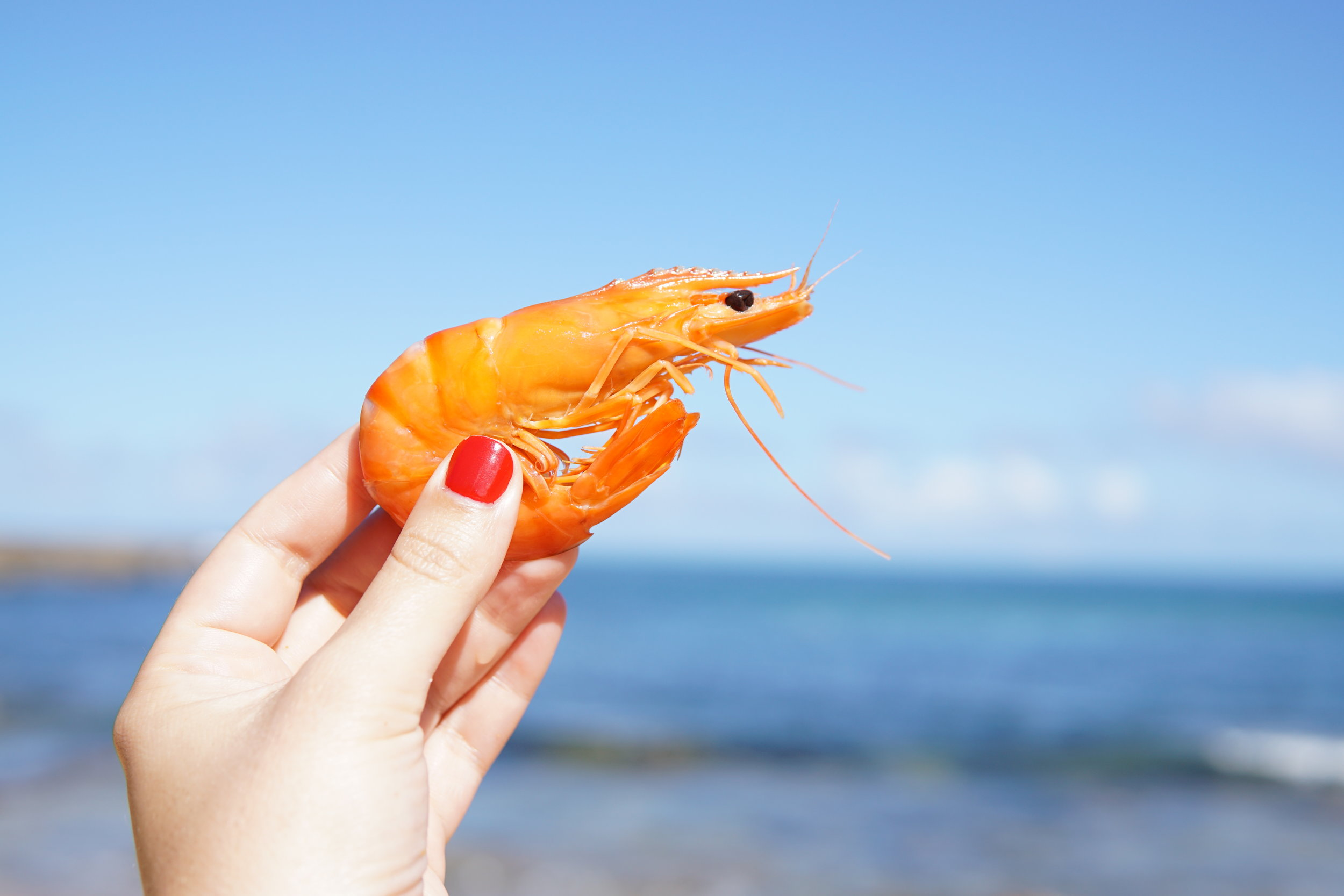 A prawn held aloft