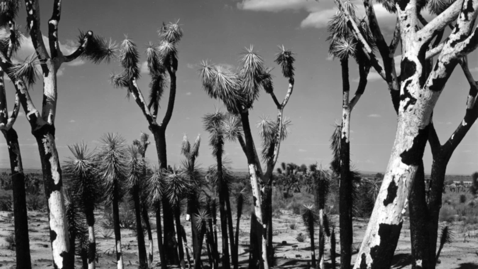 Photography - Historical and contemporaryFeatured Work By: Brett Weston