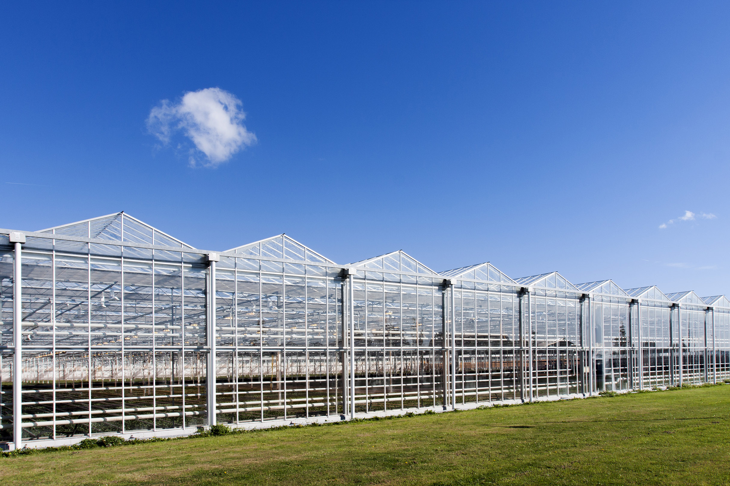 Integrating Greenhouses and Vertical Farms