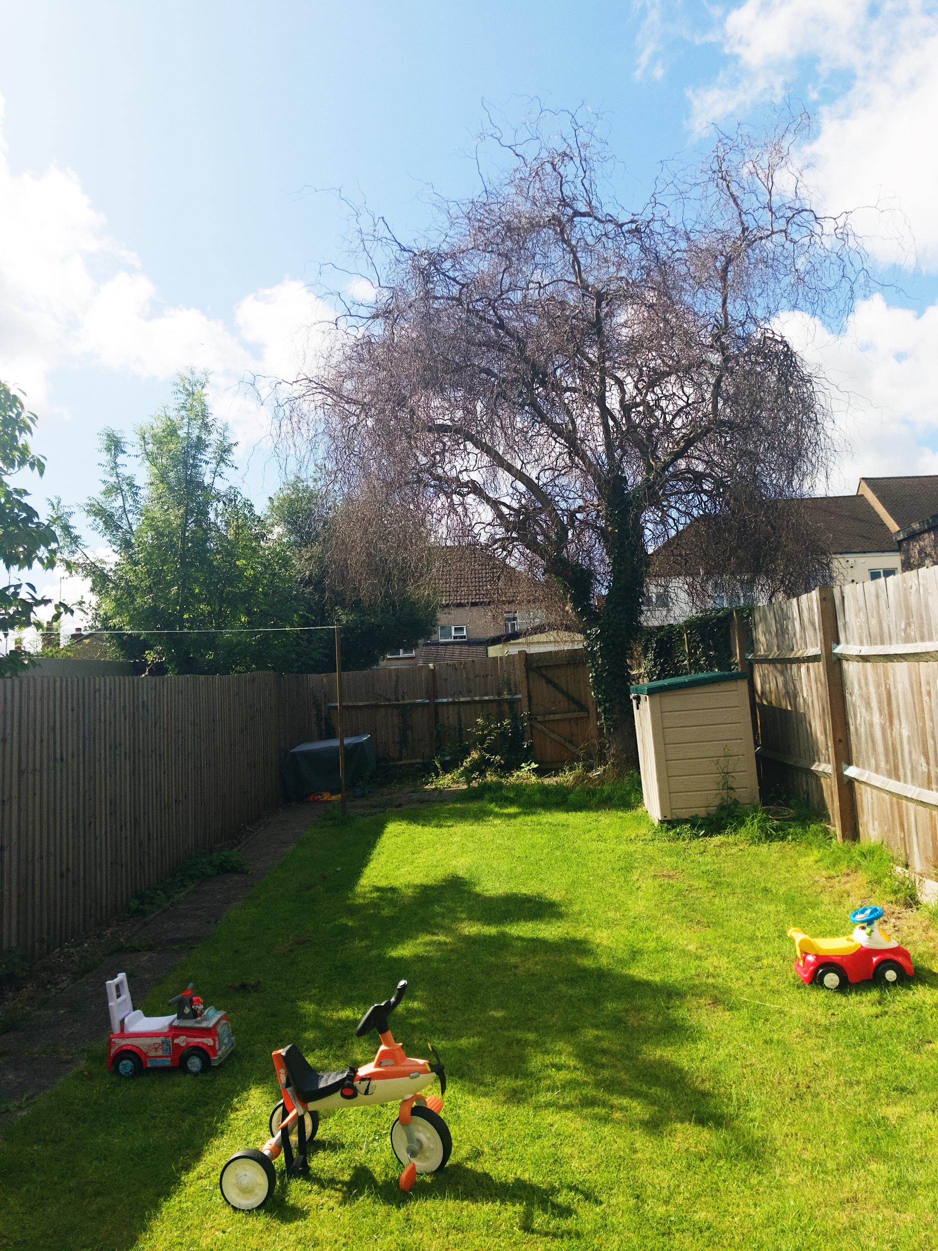 Garden in Coventry.jpeg