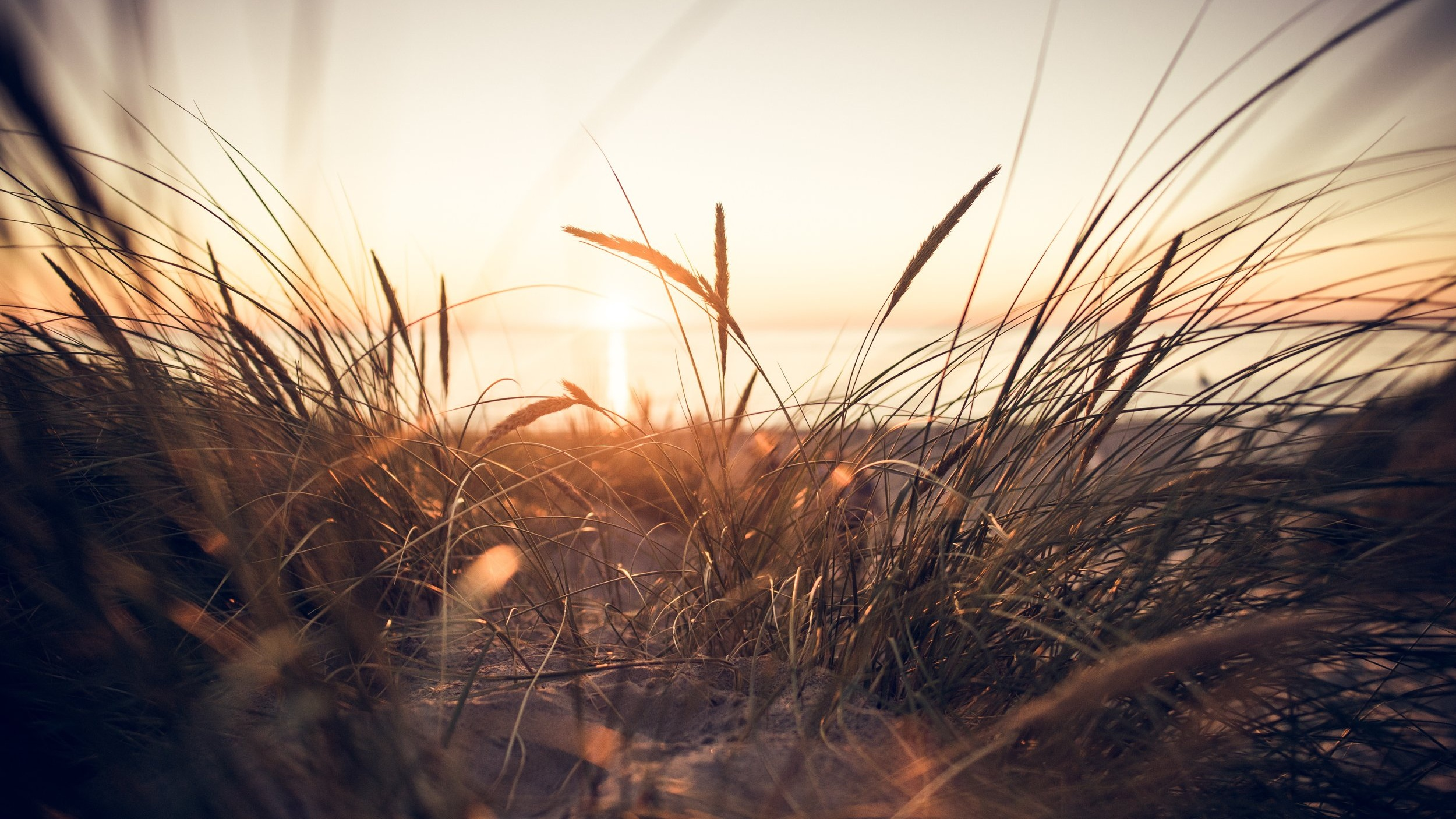 sunrise-on-wild-grasses.jpg