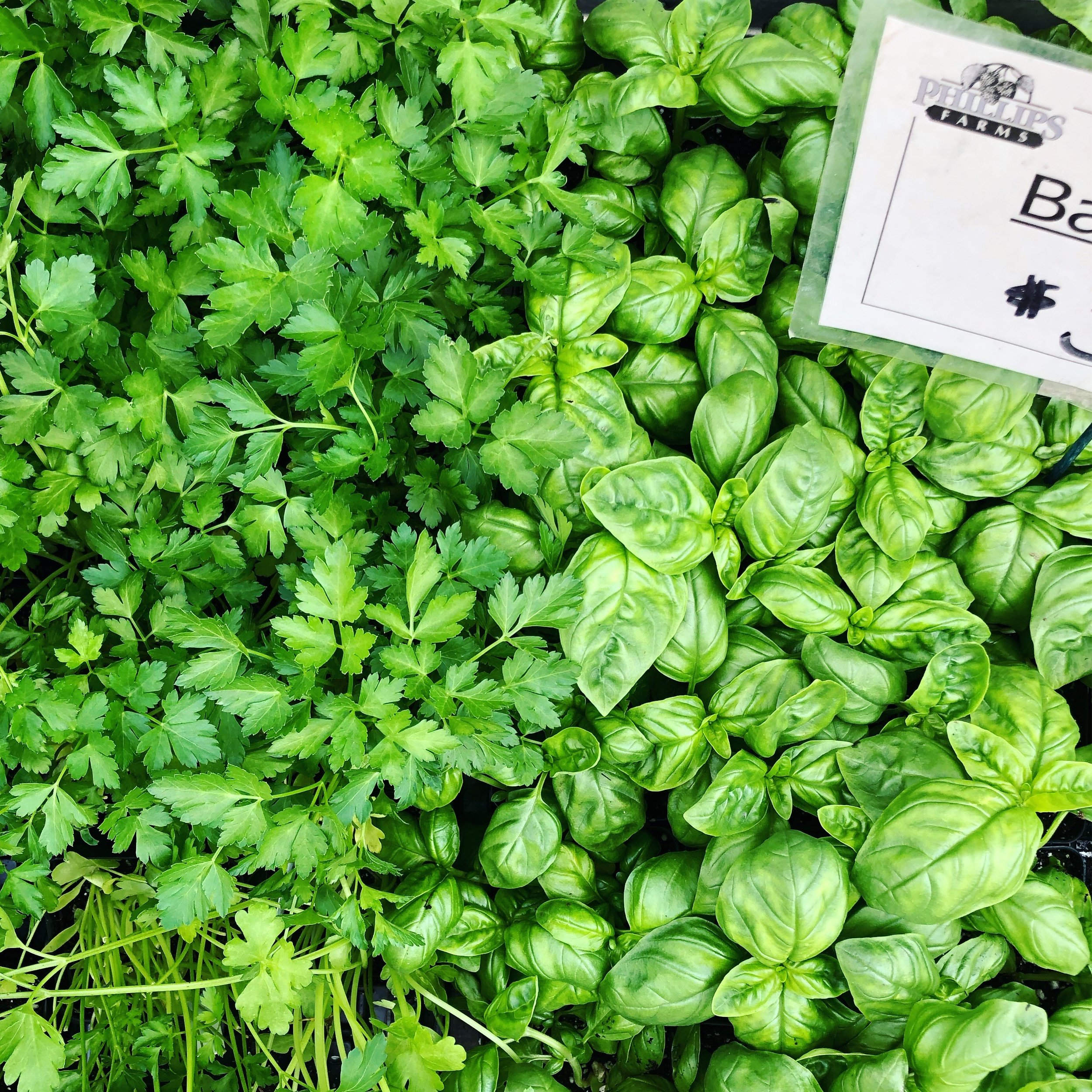 Basil and Herbs.jpg